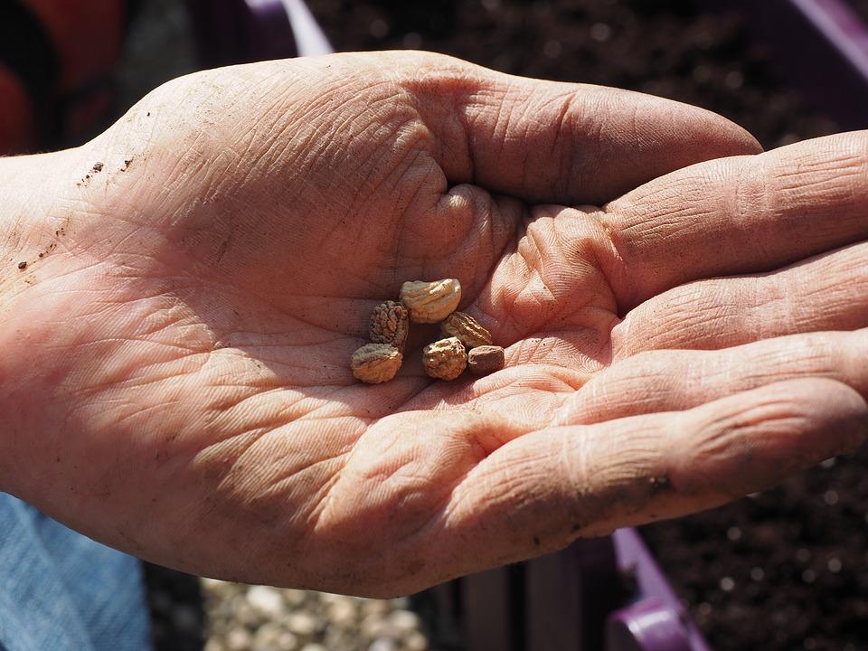 自分や先祖が蒔いた種の果実を自分が受け取る