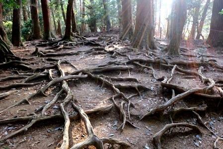 貴船神社から鞍馬寺までの「木の根道」(京都)