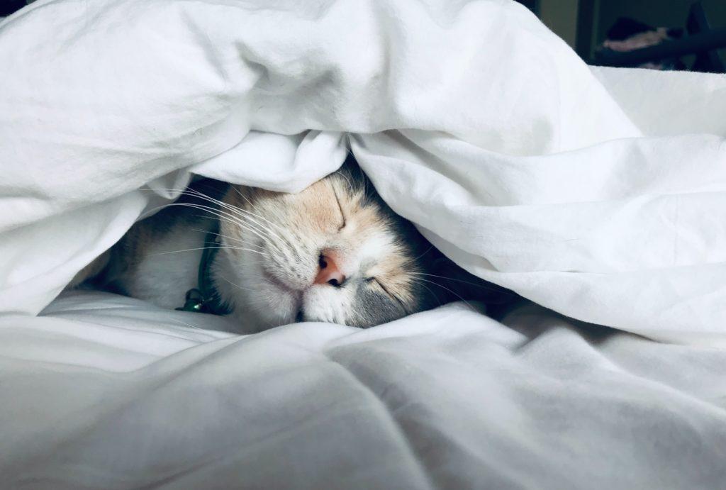 転機 どれだけ寝ても眠い