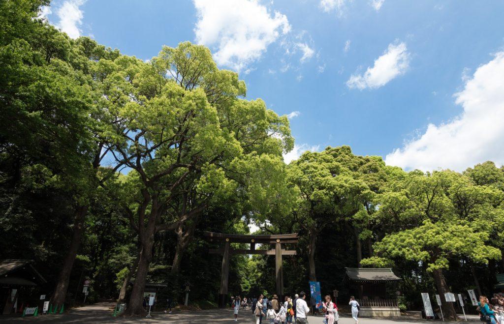東京都内おススメのパワースポット 明治神宮(めいじじんぐう)
